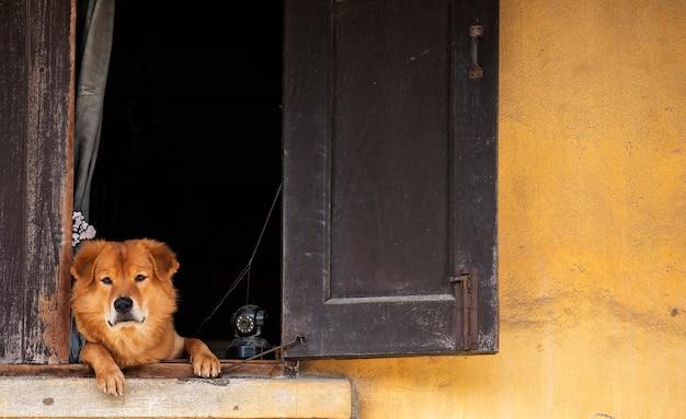Brązowy pies patrzy w przyszłość z czujnym okiem na oknie z cctv Premium Zdjęcia