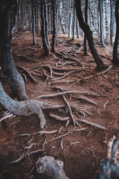Brown Pnie Drzew W Ciemnym Lesie Darmowe Zdjęcia