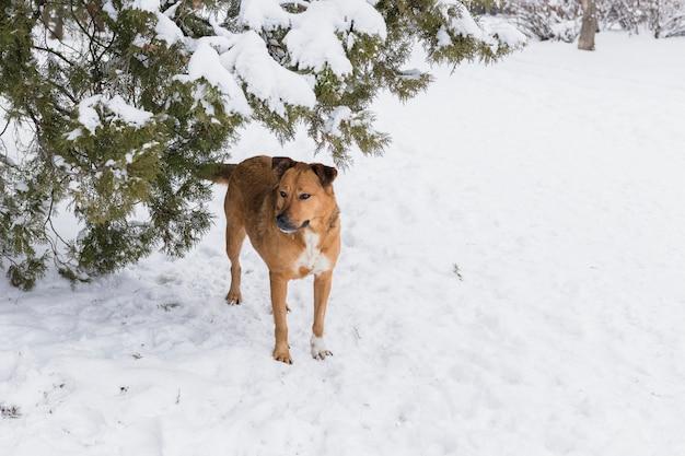 Brown psa pozycja na śnieżnym krajobrazie w zima dniu Darmowe Zdjęcia