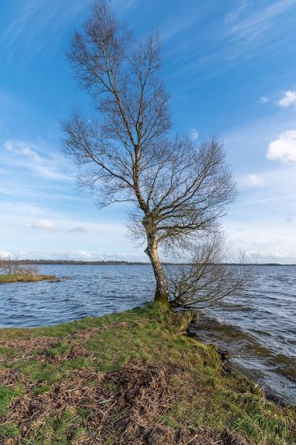 Brzoza Na Brzegu Jeziora, Błękitne Niebo I Wzburzone Wody. Wczesna Wiosna W Irlandii. Premium Zdjęcia