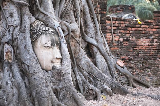 Budda W Korzeniu Drzewa Bodhi Premium Zdjęcia