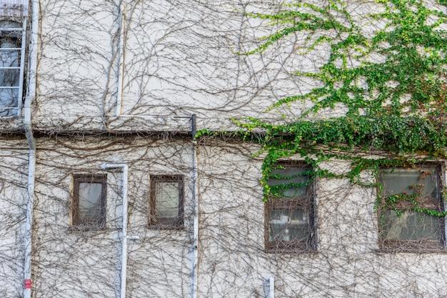 Budynek domu pełzająca roślina Premium Zdjęcia