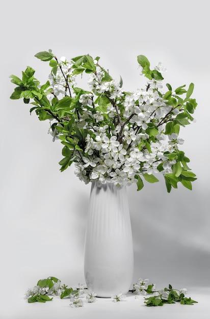 Bukiet Białych Gałęzi Czeremchy W Ceramicznym Białym Dzbanku Na Białym Stole. Wiosna Premium Zdjęcia