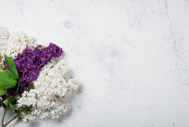 Bukiet Biel I Purpul Bez Na Betonowym Białym Tle Premium Zdjęcia
