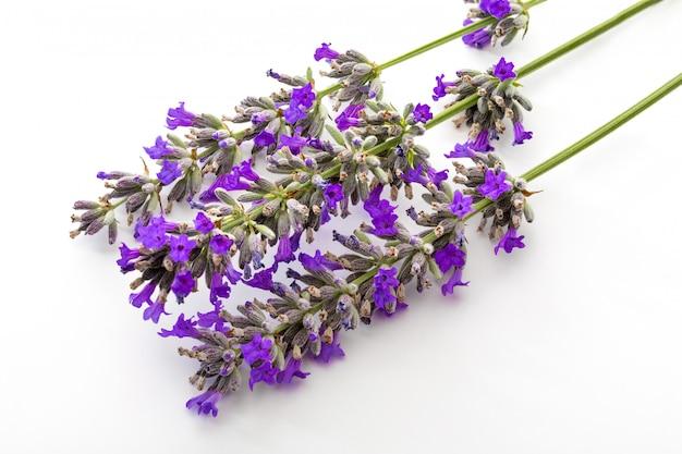 Bukiet Kwiatów I Nasion Lawendy Na Białym Tle Premium Zdjęcia