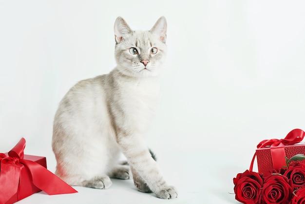 Bukiet Róż Kwiatów W Pobliżu ślicznego Kotka Premium Zdjęcia