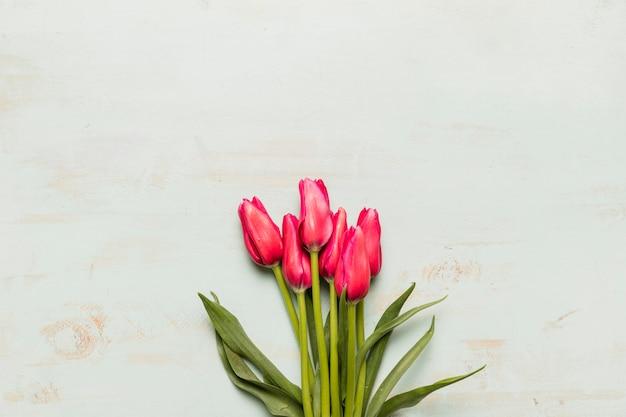 Bukiet Różowych Tulipanów Darmowe Zdjęcia