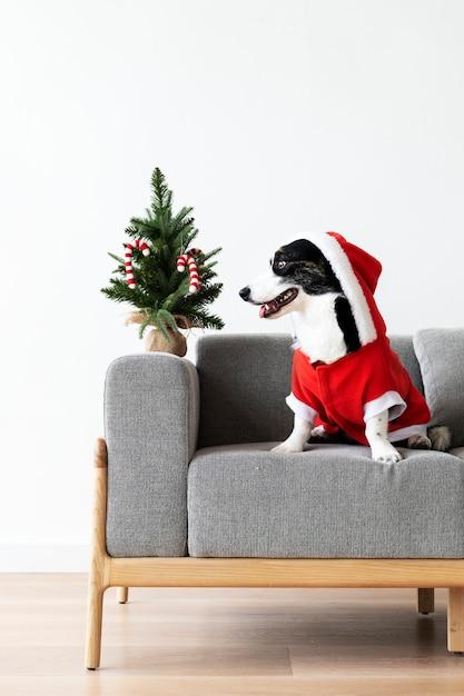 Cardigan welsh corgi w stroju świątecznym Darmowe Zdjęcia