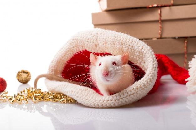 Chiński szczęśliwego nowego roku szczur 2020. biały szczur z dekoracjami nowego roku Premium Zdjęcia