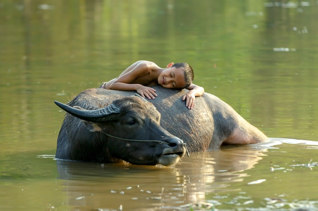 Chłopiec Na Wsi W Tajlandii śpi Z Bizonem Podczas Kąpieli Dla Swojego Bawołu Premium Zdjęcia