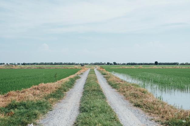 Chodnik do pola ryżowego w tajlandii Darmowe Zdjęcia