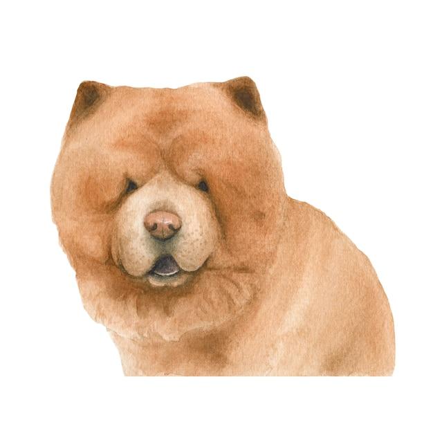 Chow Chow Pies Akwarela Ilustracja Premium Zdjęcia