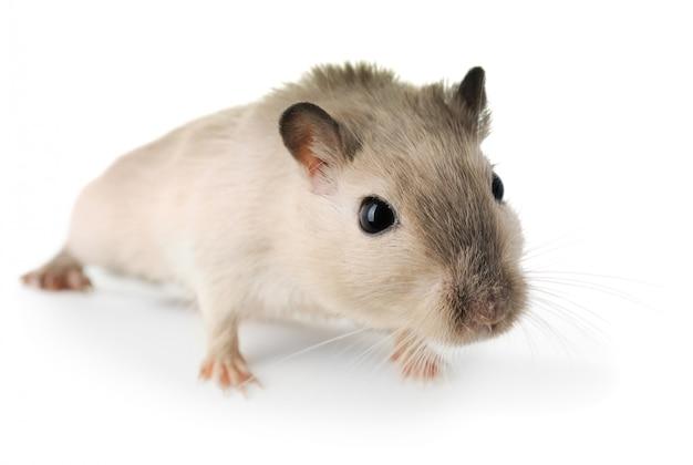 Ciekawa mysz z bliska Premium Zdjęcia