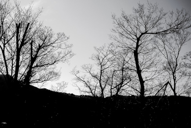 Ciemna Strefa W Lesie Darmowe Zdjęcia
