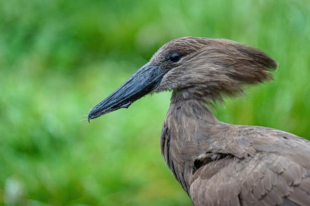 Ciemnobrązowy Ptak W Przyrodzie Darmowe Zdjęcia
