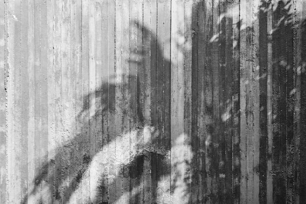 Cień drzewo na surowej betonowej ścianie Premium Zdjęcia