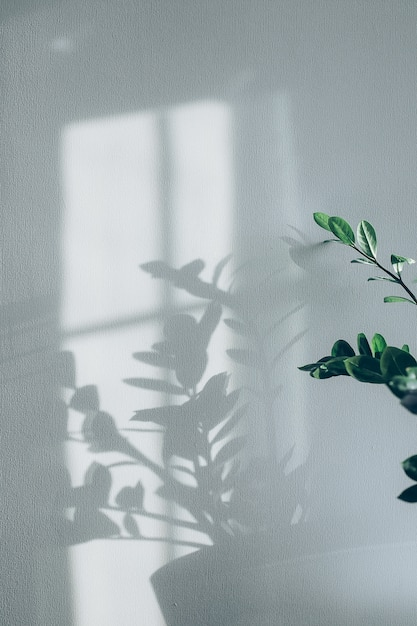 Cienie Kwiatów Domu Roślin Na ścianie Tapety Szare Tło Premium Zdjęcia