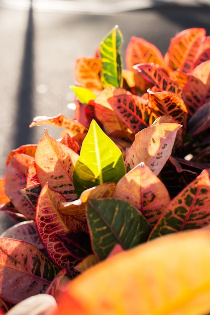 Close-up Dekoracyjnych Liści Jesienią Darmowe Zdjęcia