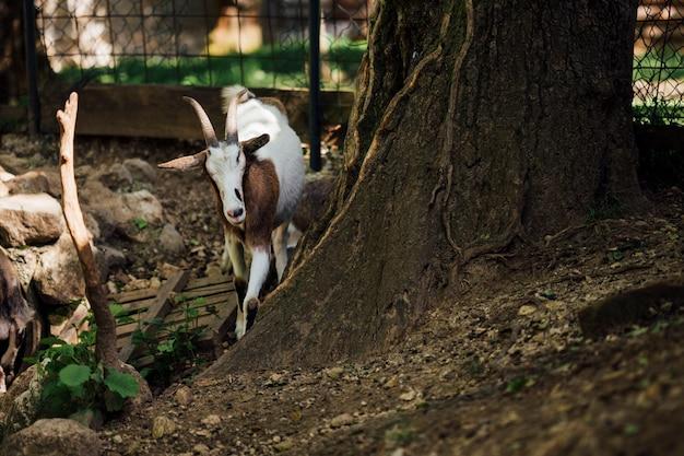 Close-up Gospodarstwa Kóz W Pobliżu Drzewa Darmowe Zdjęcia