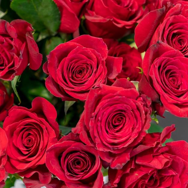 Close-up Kolekcja Pięknych Czerwonych Róż Darmowe Zdjęcia