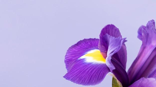 Close-up Na Całkiem Purpurowy Kwiat Premium Zdjęcia