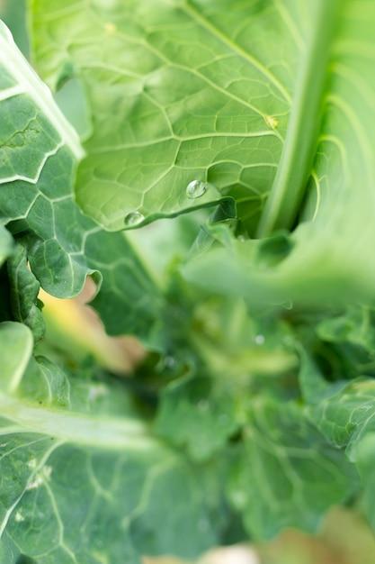 Close-up pyszne zielone liście sałaty Darmowe Zdjęcia