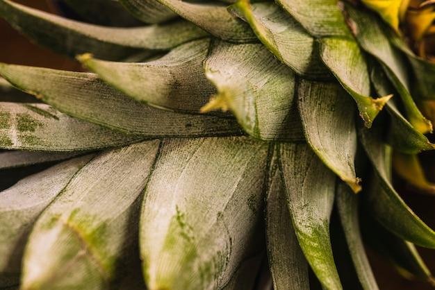 Close-up Tropikalnych Liści Ananasa Darmowe Zdjęcia