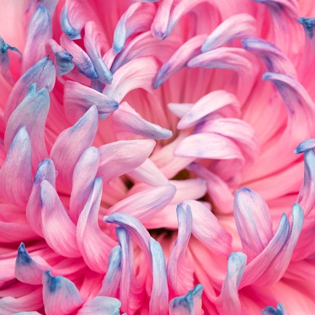 Close-up Z Całkiem Różowym I Niebieskim Kwiatem Premium Zdjęcia