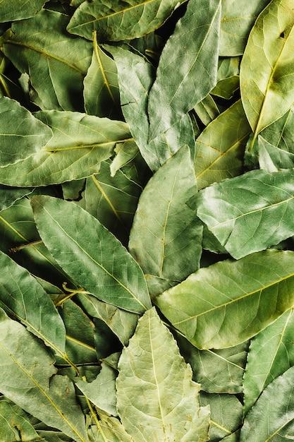 Close-up Zielone Liście Laurowe Premium Zdjęcia