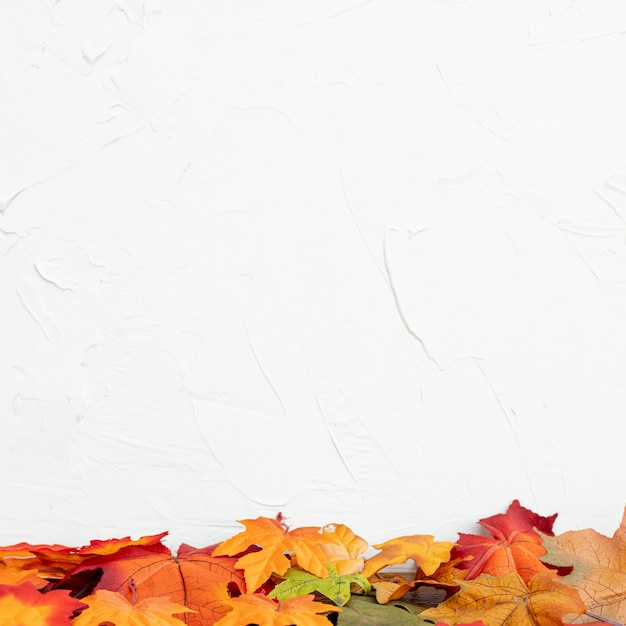 Colorul Liście Z Białym Tłem Premium Zdjęcia