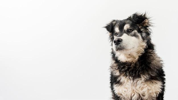 Copy-space śliczny Pies Domowy Darmowe Zdjęcia