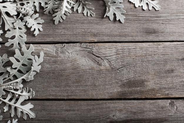 Cyneraria Liście Na Drewnianym Tle Premium Zdjęcia