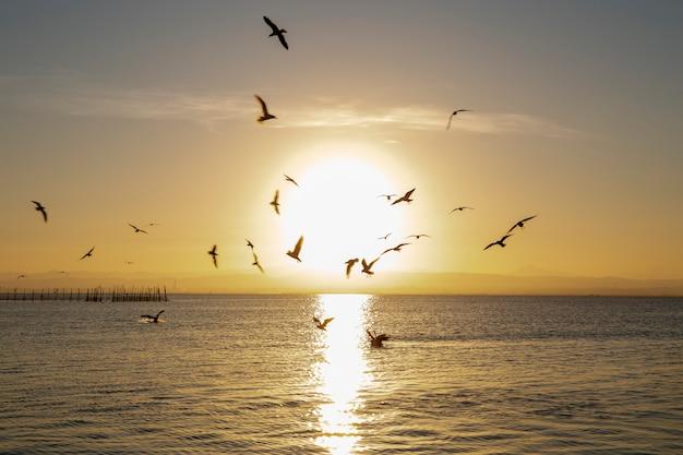 Czarnogłowe Mewy I Zachód Słońca W Albufera W Walencji Ze Słońcem Pośrodku. Premium Zdjęcia