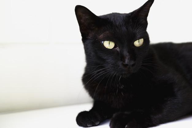 Czarny Kot Kłaść Na Podłoga. Premium Zdjęcia