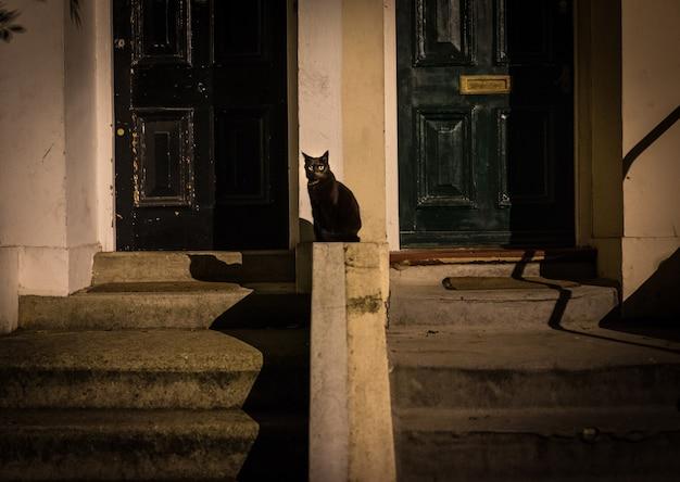 Czarny kot na ulicy Darmowe Zdjęcia