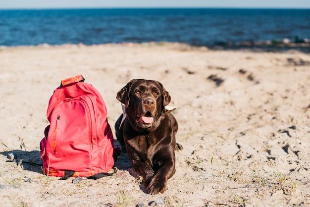 Czarny Pies Zabawy Na Plaży Darmowe Zdjęcia