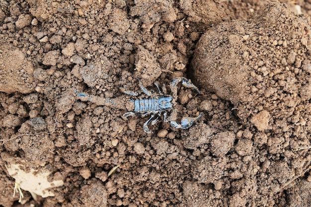 Czarny Skorpion Na Brudnej Ziemi Premium Zdjęcia