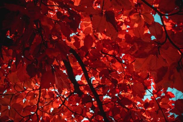 Czerwone Drzewo Liściaste W Ciągu Dnia Darmowe Zdjęcia