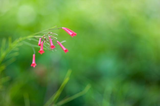 Czerwone Kwiaty O Zielonej Naturze, Pierwsze Wiosenne Kwiaty. Premium Zdjęcia