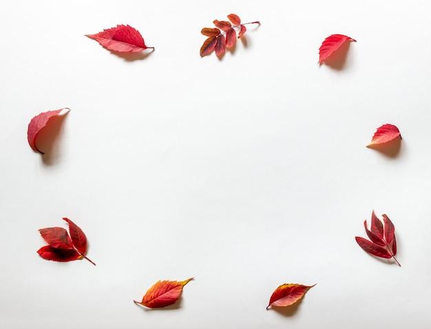 Czerwone liście na białym. jesień. Premium Zdjęcia