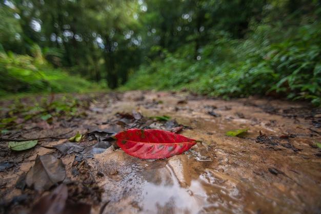 Czerwone Liście Opadające W Zielonym Lesie Są Rozmyte. Premium Zdjęcia