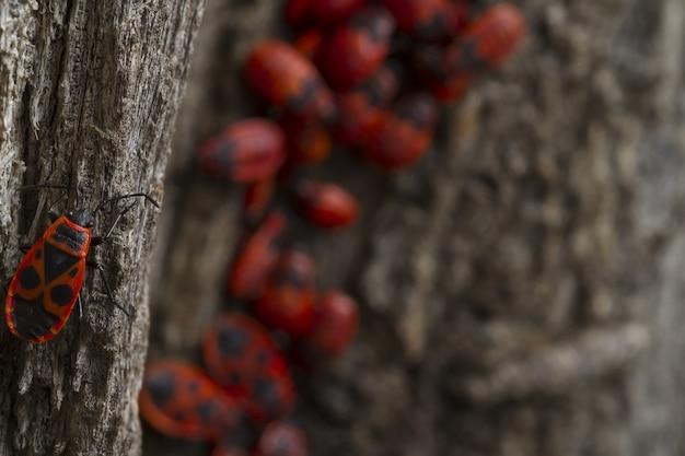 Czerwone Robaki Chodzi Na Drzewie Darmowe Zdjęcia