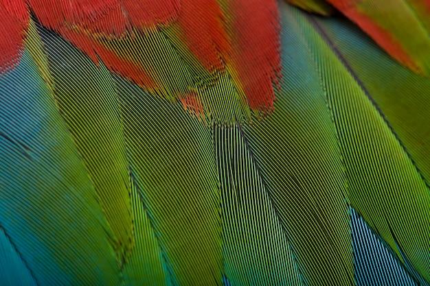 Czerwono-zielona Ara, Bliska Na Piórach Premium Zdjęcia
