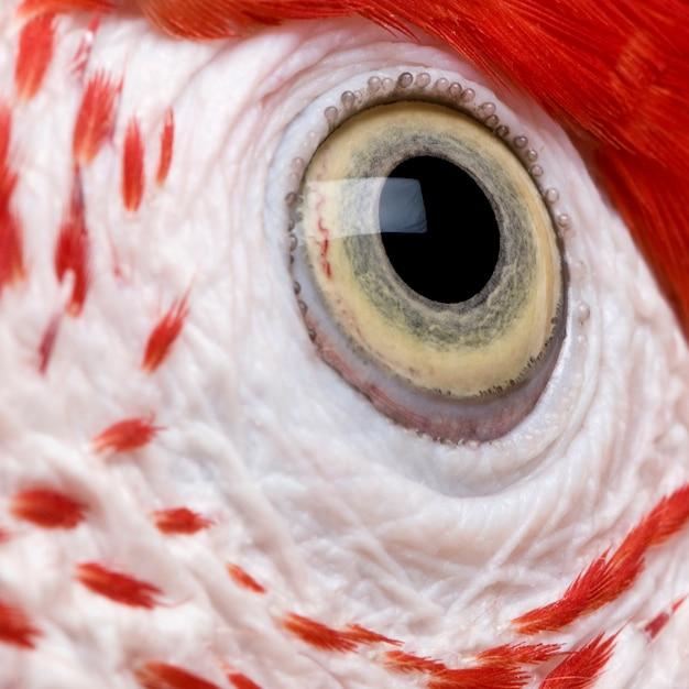 Czerwono-zielona Ara, Zbliżenie Na Oko Premium Zdjęcia