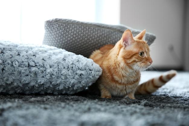Czerwony Kot Na Podłodze, Z Bliska Premium Zdjęcia