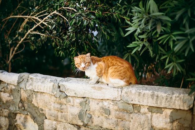 Czerwony Kot Na ścianie Premium Zdjęcia