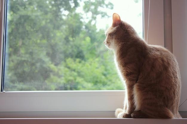 Czerwony Kot Siada Na Parapecie I Wygląda Przez Okno Premium Zdjęcia