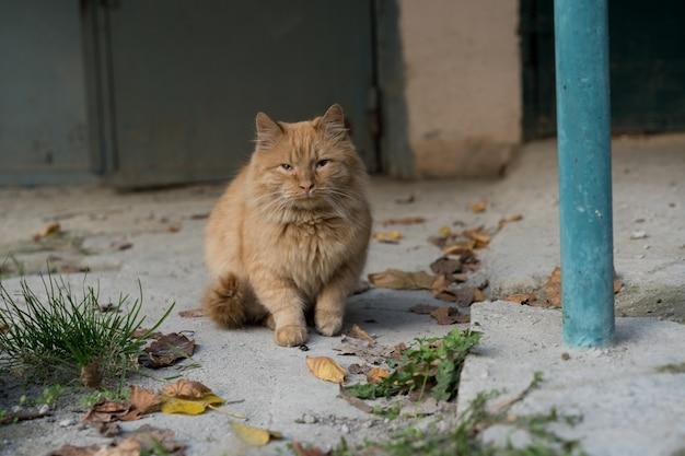 Czerwony Kot Siedzi Na Ziemi Premium Zdjęcia
