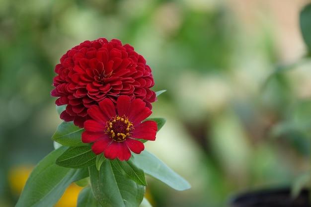 Czerwony Kwiat Z Nieostrym Tłem Darmowe Zdjęcia