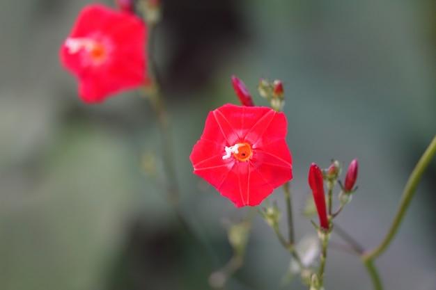 Czerwony Kwiat Z Niewyraźne Tło Darmowe Zdjęcia